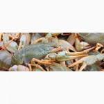 Продам живых астраханских раков, волжской рыбы, солений и маринада