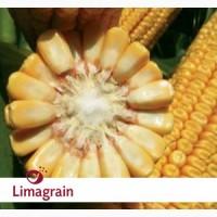ААЛЬВИТО (ФАО 210) гибрид кукурузы ЛИМАГРЕЙН (Limagrain)