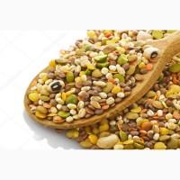 ООО НПП «Зарайские семена» на постоянной основе закупает зернобобовые смеси
