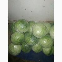 Продам свежую капусту, сорт Браво и Компас