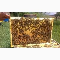 Качественные Пчелопакеты