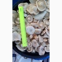 Продам грибы солено-отварные грузди и рядовки