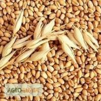 Куплю пшеницу, ячмень, рож, овес, рапс