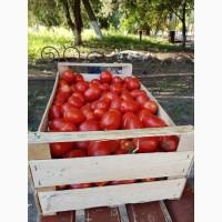 Республика Крым.Деревянные ящики из шпона для упаковки помидоров