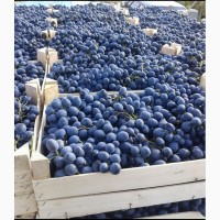 Виноград Чарос по цене от производителя