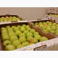 Породам яблоки оптом