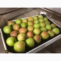 Яблоки оптом Гренни Смит