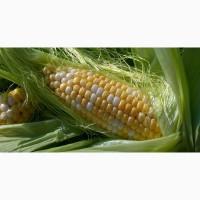 КФХ Садыгин Сеем, сажаем большим оптом зерновые бобовые культуры на наших полях хозяйствах