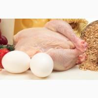 Яйца и мясо курицы