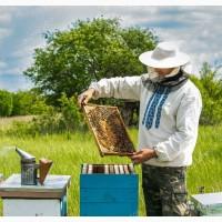 Услуга помощник пчеловода
