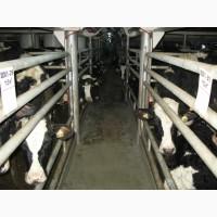Крс молочного, мясного направления от 180-до 1000 голов