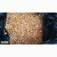 Кукуруза 10000 тонн