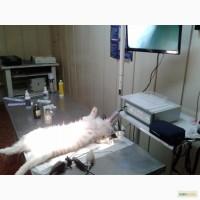 Продам эндоскопическую стойку ветеринарную