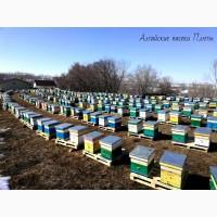 Алтайский мёд и другие продукты пчеловодства