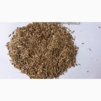 Семена райграса (райграс пастбищный)