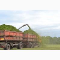 Услуги перевозки зерна и свеклы с полей