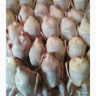 Продаётся мясо цыпленок бролера и перепела