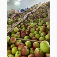 Продам яблоко в ассортименте оптом