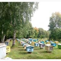 Продаю пчелосемей среднерусской породы и 16 рамочные утепленные ульи