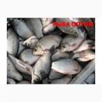 Рыба свежемороженая из Астрахани от производителя.