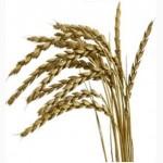 Купим пшеницу