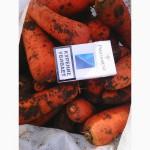 Продам морковь сорт абака