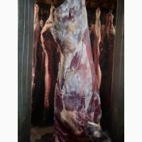 ООО Сантарин продаёт мясо говядина, свинина, баранина, цеплят бролерных
