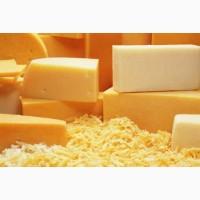 Закупаем оптом сыры и сырный продукт
