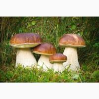 Белый гриб заморозка II сорт оптом и в розницу недорого