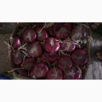 Продам семена лука ялтинского