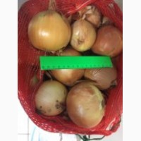 Продаем лук оптом 1-2 сорт