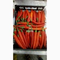 Продам перец красный острый