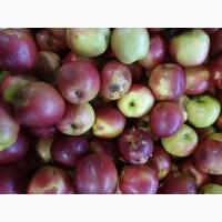 Яблоки для промпереработки