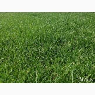 ООО НПП «Зарайские семена» продает травосмеси оптом