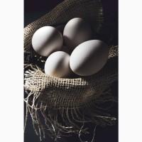 Яйцо пищевое