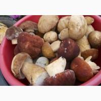 Белый гриб заморозка II сорт оптом и в розницу