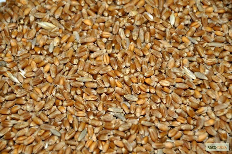 катера сколько мы продаём зерна состоит