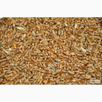 Продажа зерна, купить зерно в СПб