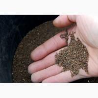 Семена фацелии (фацелия)