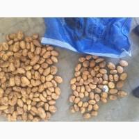 Картофель свежий Пакистан прямой импортер