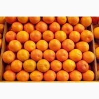 Качественные мандарины Дубиш по цене от производителя