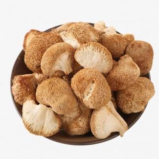 Продажа лечебных грибов: шиитаке, чага, мухомор красный, ежовик гребенчатый и др