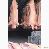 Мясо свинины 3 категории