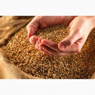 Пшеница в розницу