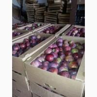 Яблоки Европейские сорта