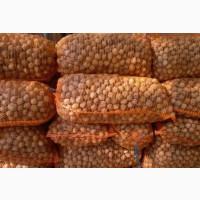 Грецкие орехи оптом; Ставропольский край