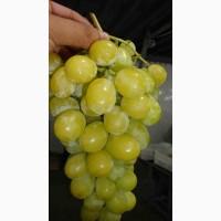 Прямые поставки винограда
