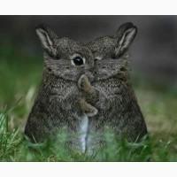 Комбикорм для кроликов в Московской области