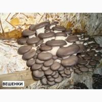 Мицелий грибной P-80 вешенки