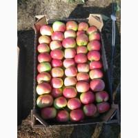 ООО Сантарин, реализует яблоки Белорусского производства